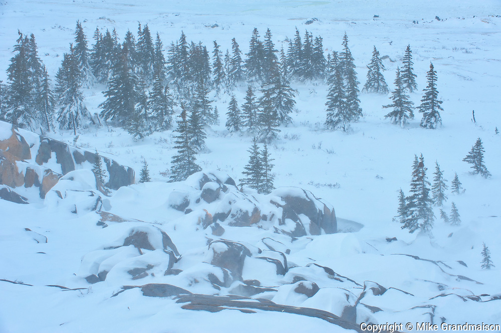 Winter on the tundra, Churchill, Manitoba, Canada