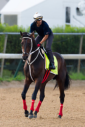 Derby 142 hopeful Majesto with JJ Delgado up were on the track for training, Monday, May 02, 2016 at Churchill Downs in Louisville.
