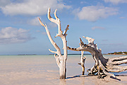 Driftwood along Girls Bank bay in Dunmore Town, Harbour Island, The Bahamas