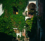 A294M8 Ivy covered walls courtyard Spanish colonial style hotel San Miguel de Allende Mexico