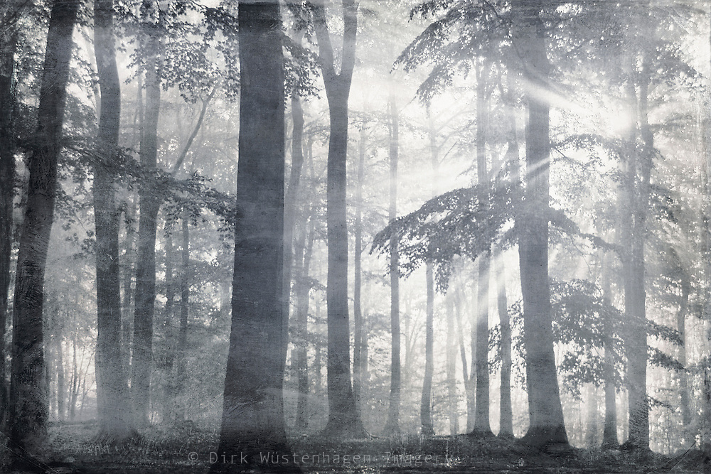 Monochrome forest scene. Rays of light breaking through the foliage. <br />