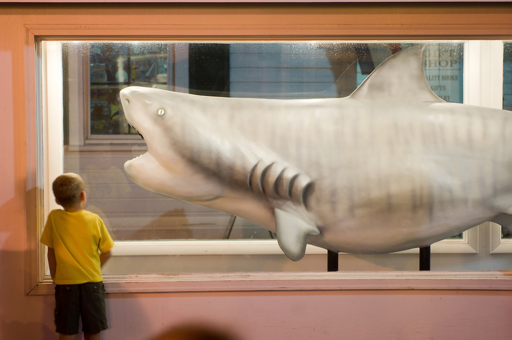 Boy looking at a modeled shark exhibit