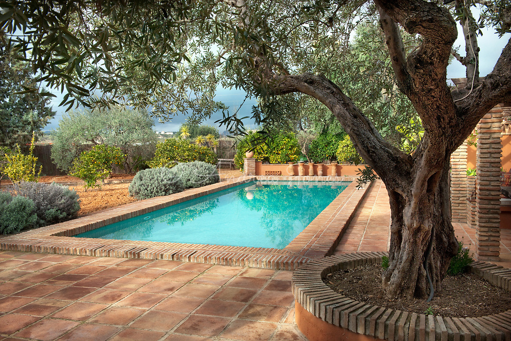 Raised bed planted with an Olea europaea (olive) tree<br /> beside the pool<br /> <br /> <br /> Finca Vida