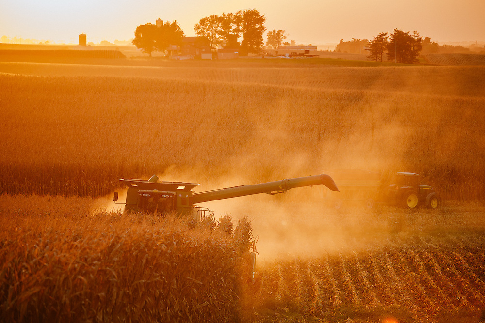 Harvesting corn in Iowa <br /> Photographed by editorial lifestyle Texas photographer Nathan Lindstrom