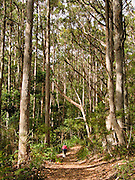 Hike through forest to Cape Raoul, Tasman National Park, Tasmania, Australia.