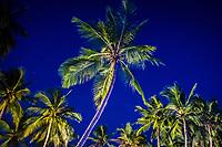 Palm trees at night, Mombasa Marine Protected Area, Kenya