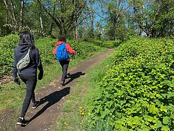 United States, Washington, Bellevue, Coal Creek Natural Area hiking trails