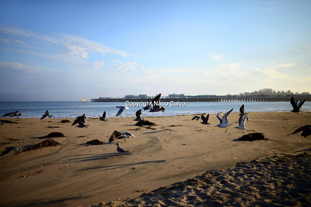 Santa Cruz state beach, California.
