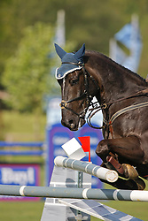 Horse (Dunon Gilles - Waikiki vd Fruitkorf)<br /> CSIO Lummen 2008<br /> Photo © Hippo Foto