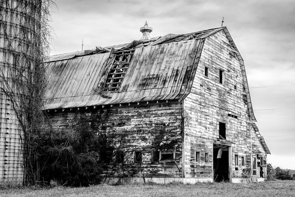 This old weathered barn and silo are part of an abandoned dairy farm.