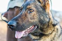 Anti-poaching dog patrols and training session, Mkhaya Game Reserve, Swaziland