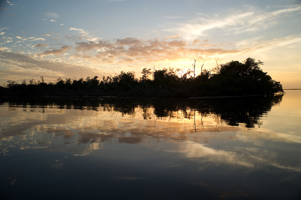 Mangrove Island , Florida