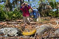 Yellow Rat Snake (Pantherophis obsoleta quadravittata), The Legacy Club's trip to Little St. Simon's Island, Georgia, 2013.