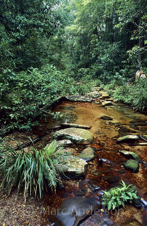 Bola Creek, Royal National Park, Australia.