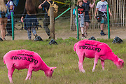 The famous pink sheep sponsored by BBC music - The 2017 Latitude Festival, Henham Park. Suffolk 14 July 2017