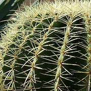 Cactus at Cactimundo. San José del Cabo, BCS.Mexico Mexico.