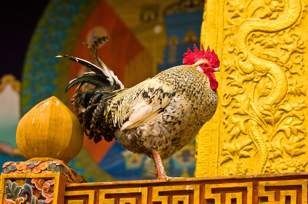 Rooster at the Punakha Dzong Monastery, Bhutan
