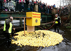© Licensed to London News Pictures. 26/12/2011. KENILWORTH, UK.  The annual Boxing Day Duck race in Kenilworth gets started today,  with over 1500 plastic ducks being dropped into a brook in Warwickshire.   Crowds gather to cheer on the 'swim off' as the ducks float down a 300 yard stretch of a local brook.  Photo credit: Alison Baskerville/LNP