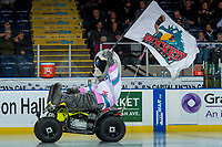 KELOWNA, CANADA - FEBRUARY 2:  Kelowna Rockets' mascot Rocky Raccoon enters the ice against the Everett Silvertips on FEBRUARY 2, 2018 at Prospera Place in Kelowna, British Columbia, Canada.  (Photo by Marissa Baecker/Shoot the Breeze)  *** Local Caption ***
