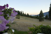 Dad's petunias decorate the view from the deck in the Okanagan