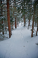 artistic image of Colorado forest