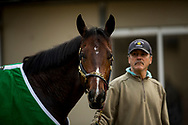 DEL MAR, CA - NOVEMBER 01: Bolt d'Oro with groom Saul Marquez at Del Mar Thoroughbred Club on November 01, 2017 in Del Mar, California. (Photo by Alex Evers/Eclipse Sportswire/Breeders Cup)