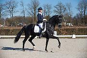 Gerdine Maree - Dream Boy<br /> Selectie WK Jonge Dressuurpaarden 2013<br /> © DigiShots