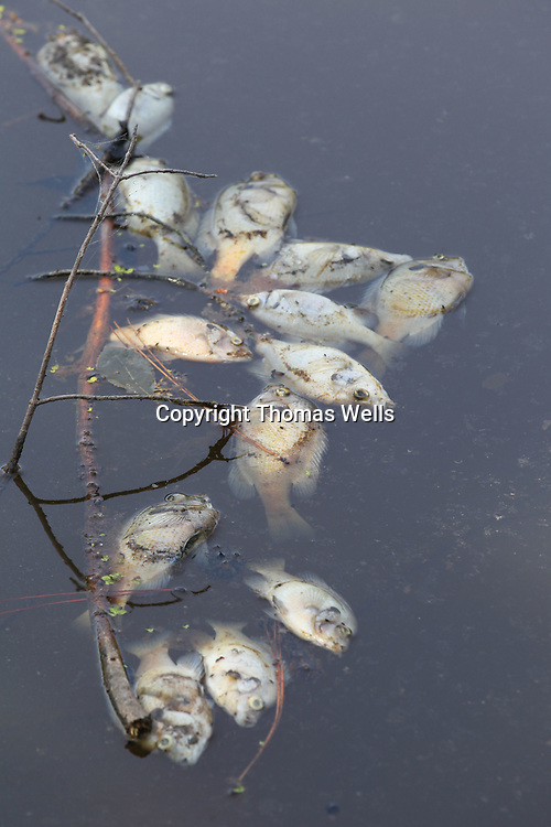 Hundreds of dead fish floated to the surface of a lake on Strain Street in Tupelo and had to be removed.