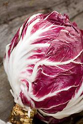 Red leaved chicory - Radicchio 'Palla Rossa Bella' syn. Cichorium intybus