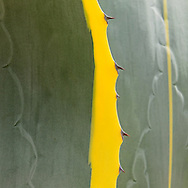Agave Cactus, Mission Santa Barbara, also known as Santa Barbara Mission, is a Spanish mission founded by the Franciscan order Santa Barbara, California.
