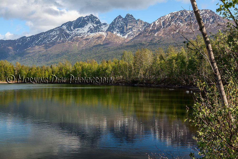 New spring leaves and the Chugach Mountains are mirrored on the surface of Reflections Lake, Palmer Hay Flats, Alaska.