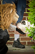 During the Uptown Pitman Music and Arts Festival a dog takes a moment to check out a lion pupet.