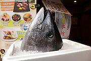 head of bluefin Tuna fish in front of Sushi restaurant in Japan