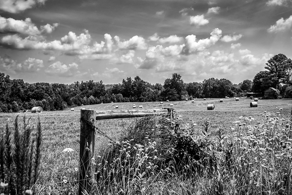 Baled hay across a large field in rural Caswell County, North Carolina