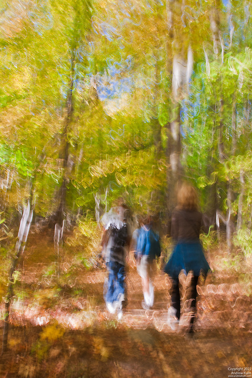 This photo was taken while I was walking with my family through the forest by our home.  It is an abstract obtained using a slow shutter speed while I was walking behind my family.  This particular shot is a 0.4 second expeosure.