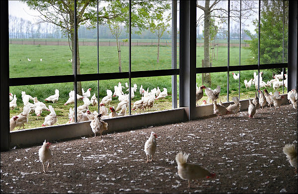 Nederland, Homoet, 21-4-2014 Kippenfarm voor leghennen houdt open dag vanwege Pasen. Er zijn vrije uitloopkippen en scharrelkippen. Foto: Flip Franssen/Hollandse Hoogte