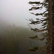 Trees in the haze - Mt. Rainier National Park