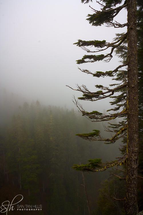 Trees in the haze - Mt. Rainier National Park
