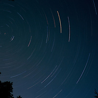 Star trails with Polaris and pine trees