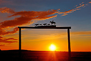 Ranch gate at sunset<br /> near Strathmore<br /> Alberta<br /> Canada