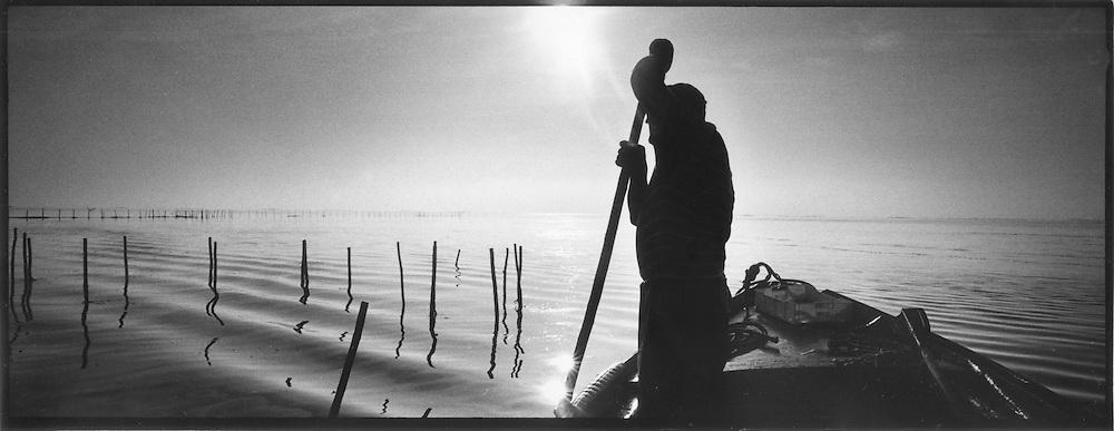 Pescatore che fissa le reti tramite dei pali di legno nella laguna di Venezia. Tradizione storica<br /> <br /> Fisherman captures networks through the wooden poles in the Venice lagoon. historical tradition