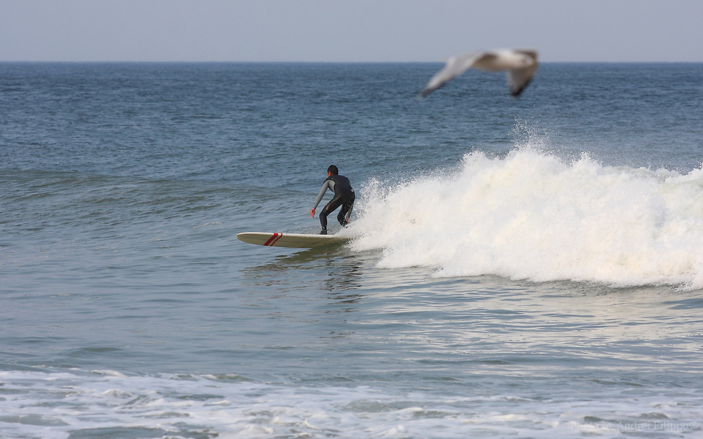 Surfer and the bird at the Marconi Beach, Cape Cod, Massachusetts, USA, September 3, 2011.