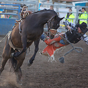Gus Pinkerton comes to grief as he falls from his mount during the Saddle Bronc riding event at the Branxton Rodeo at Branxton, Hunter Valley,  New South Wales, Australia, on Saturday 17th October 2009.  Photo Tim Clayton.