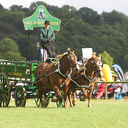 Randy Hiscock driving Suffolk Punches, Anastasia and Minnesota <br /> 6th  Pairs Turnouts