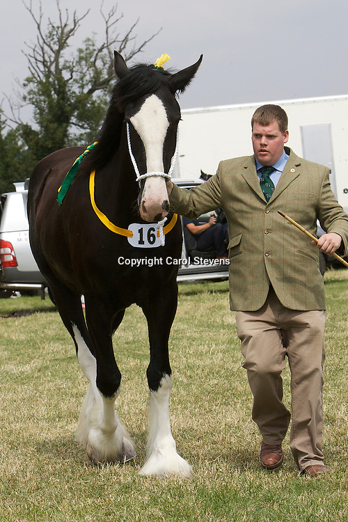 Heavy Horse classes at the Weeton Show 2011<br />
