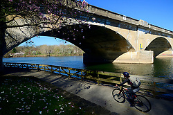 People jog, stroll and bike along the Schuylkill river against a backdrop of cherry blossom trees in full bloom, in the Fairmount Park section of Philadelphia, PA on April 10, 2019. Each spring the vibrant tree line proves popular amongst tourists, photographers and Instagrammers.