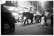 Elephants walking through midtown Manhattan at 1. a.m. to the Circus. © Copyright Photograph by Dafydd Jones 66 Stockwell Park Rd. London SW9 0DA Tel 020 7733 0108 www.dafjones.com