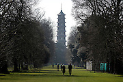 © Licensed to London News Pictures. 11/03/2015. Kew, UK.People walk toward the Chinese Pagoda. People enjoy the cross displays at Kew Garden's today 11th March 2015. The display features the variety Crocus tommasinianus. The Uk has enjoyed warm sunny weather this week.  Photo credit : Stephen Simpson/LNP