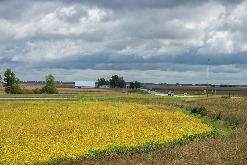 USA,Illinois, Midwest, Springfield, soy field