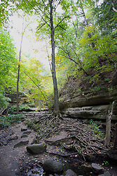 25 September 2012:   Illinois scenery near Oglesby and Ottawa..Matthiessen State Park. Hiking trail in the Upper Dells area has a stair case leading out.  The creek is dry this year because of the 2012 drought.  roots on this tree resemble medusa hair.